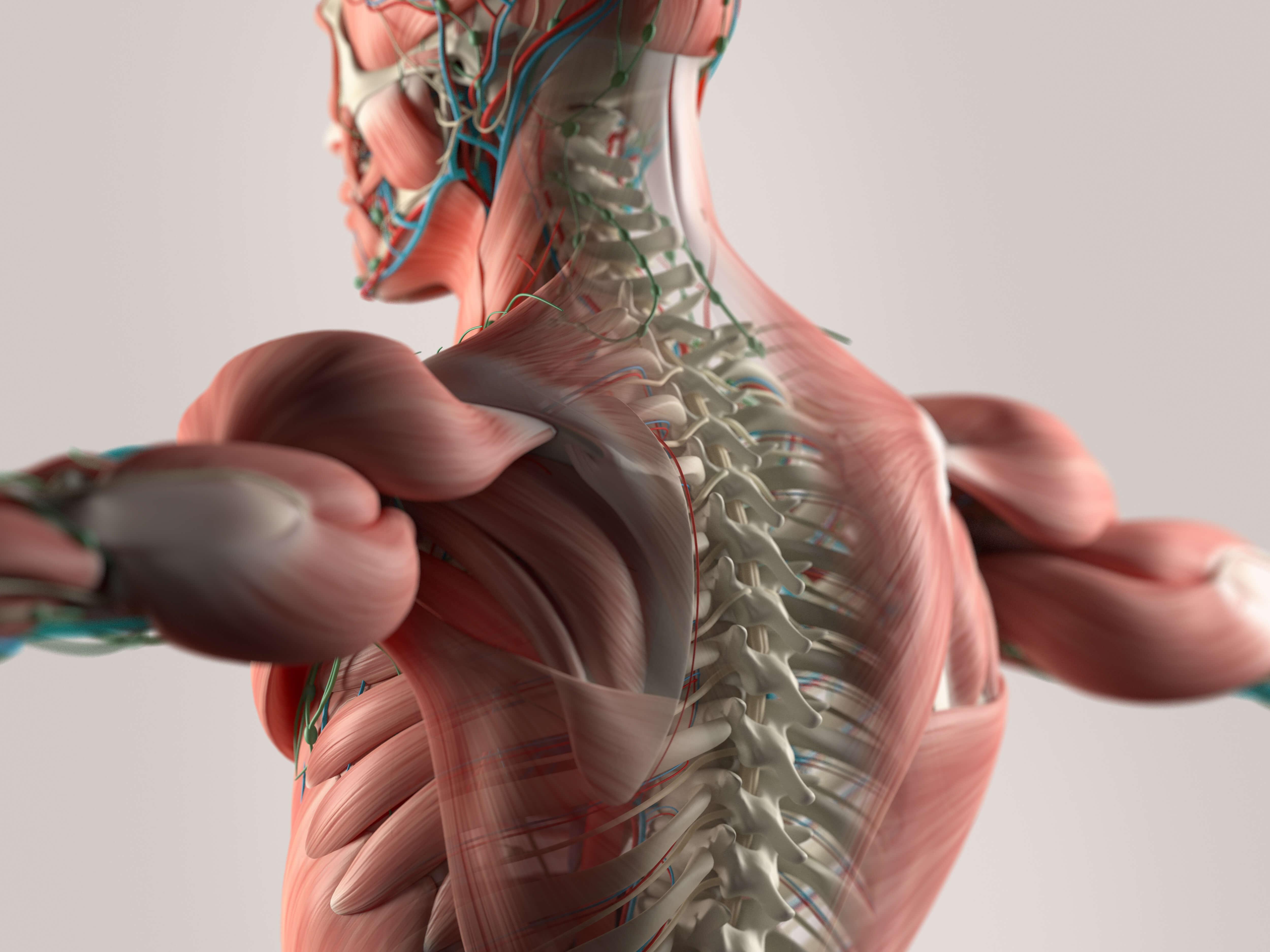 neck adjustments
